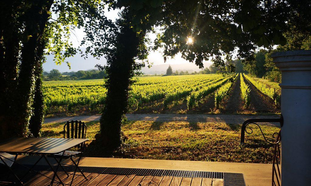 lever de soleil sur les vignes du domaine de la croix des pins