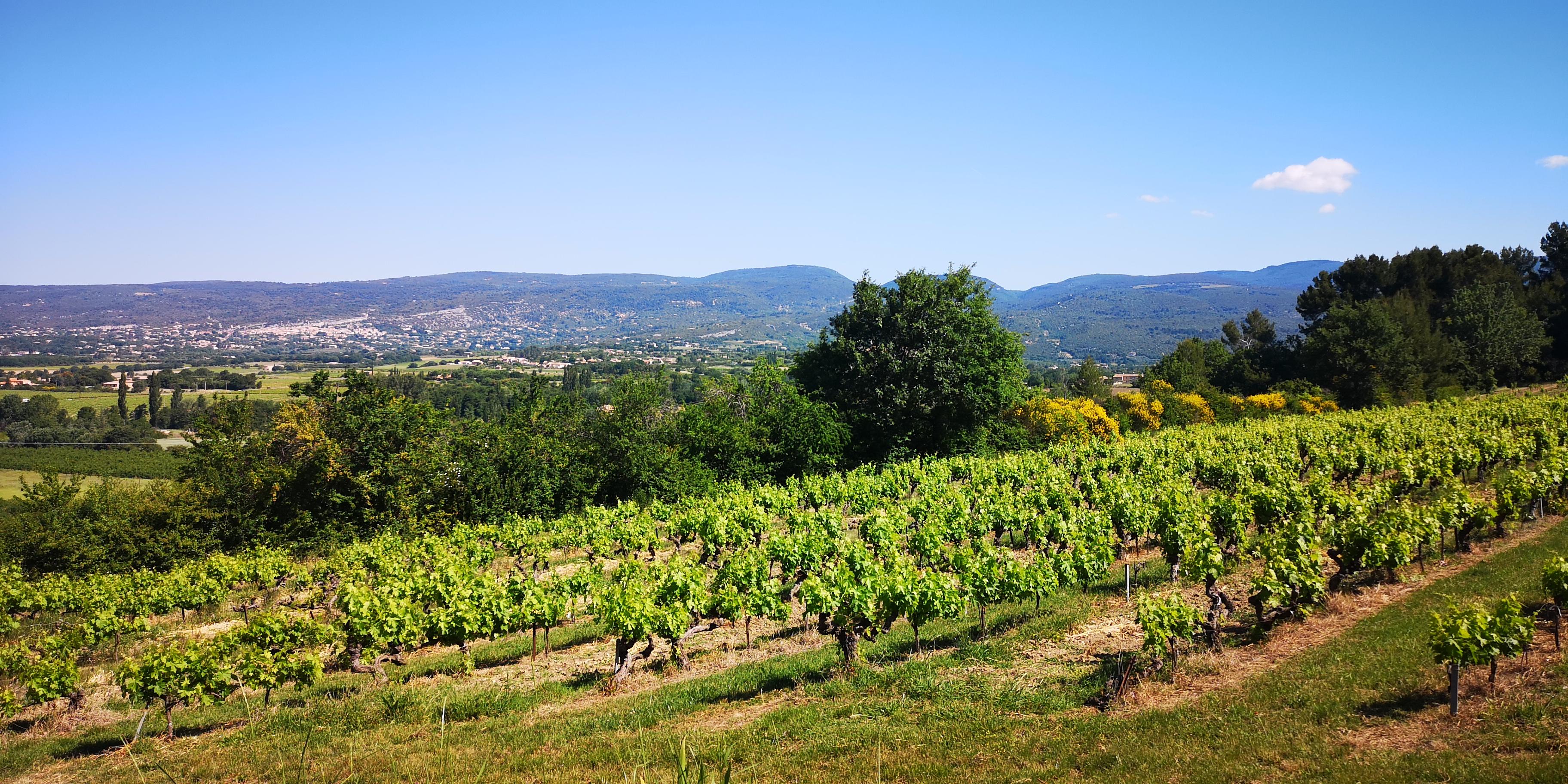 Oenotourisme dans le Luberon (Rhône)