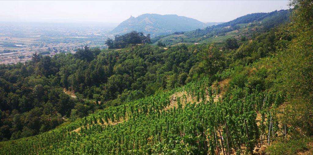 Une parcelle du vignoble de Cornas, au Sud de la Vallée du Rhône septentrionale