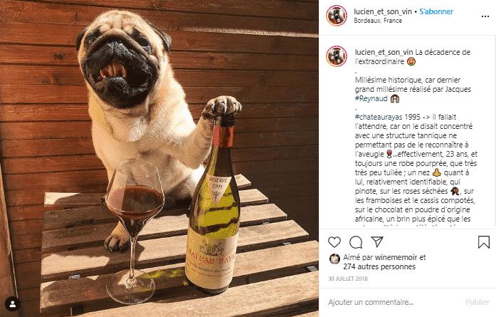 Lucien ne partage pas son Château Rayas ! compte instagram vin